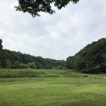 [2017/06/20] 早朝、里山公園。